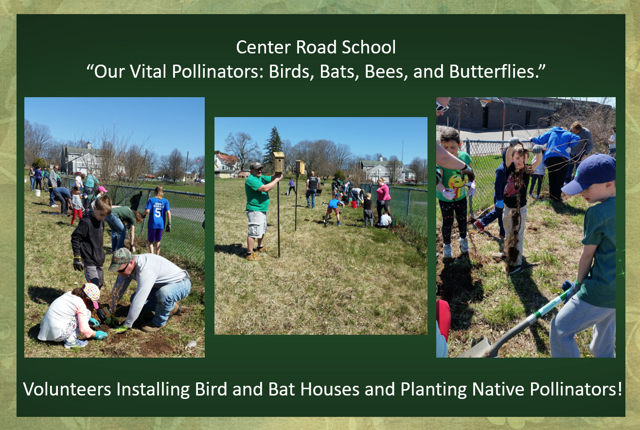 Center Road School Connection: Birds, Bats, Bees, and